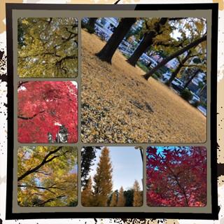 171205☆芝公園.jpg